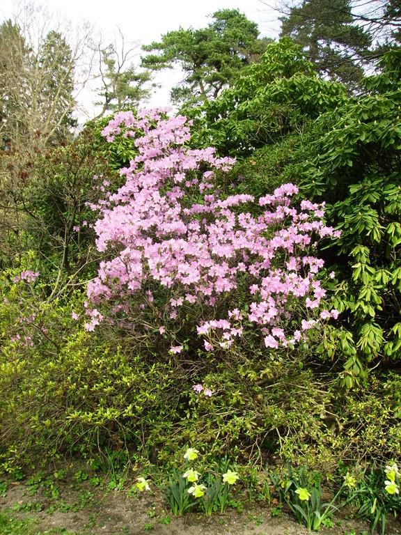 Frühling im Hofgarten