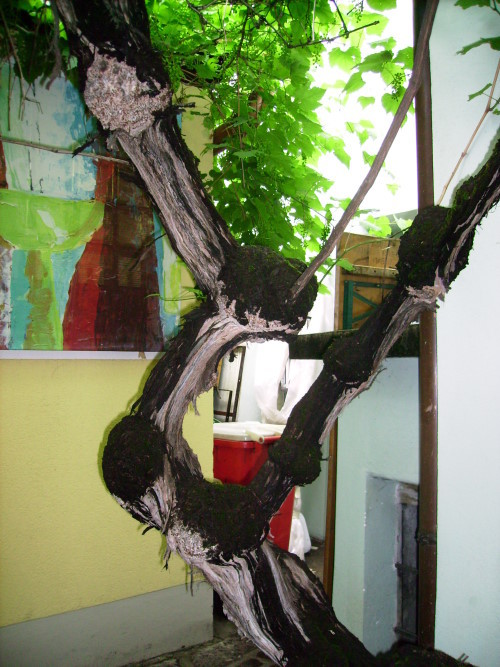 Äste des Weinrebenstocks