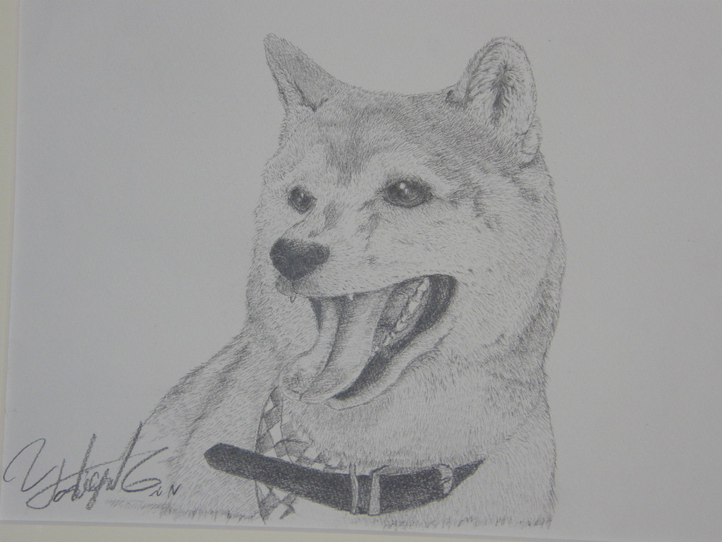 柴犬のシュリ