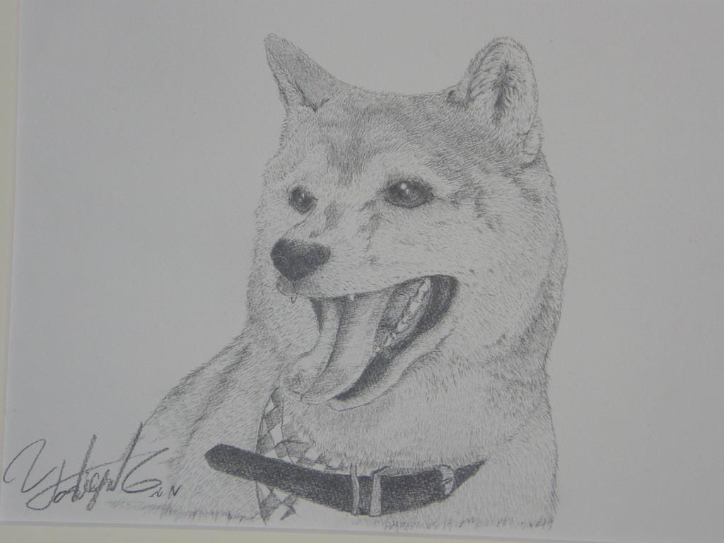 柴犬のシュリ、私のことが大好きみたい・・・