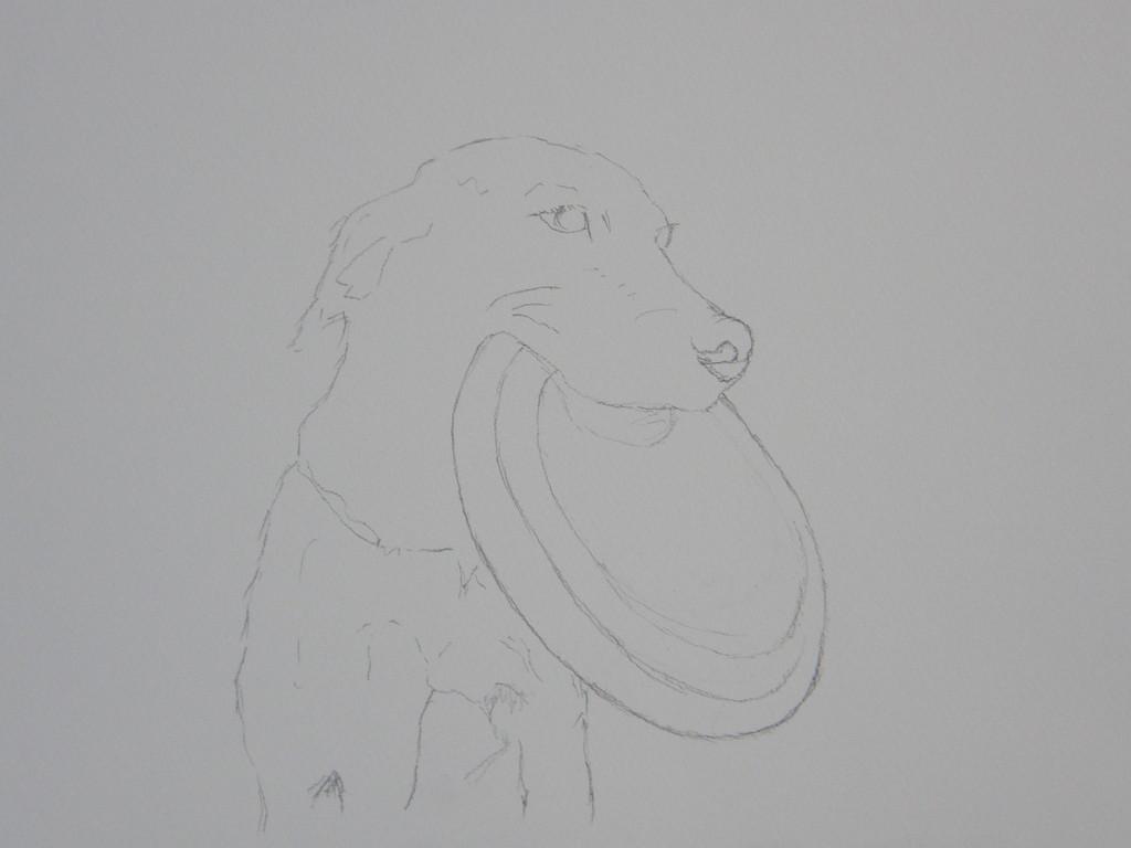 愛犬のベす、フリスビードッグとして活躍していた。