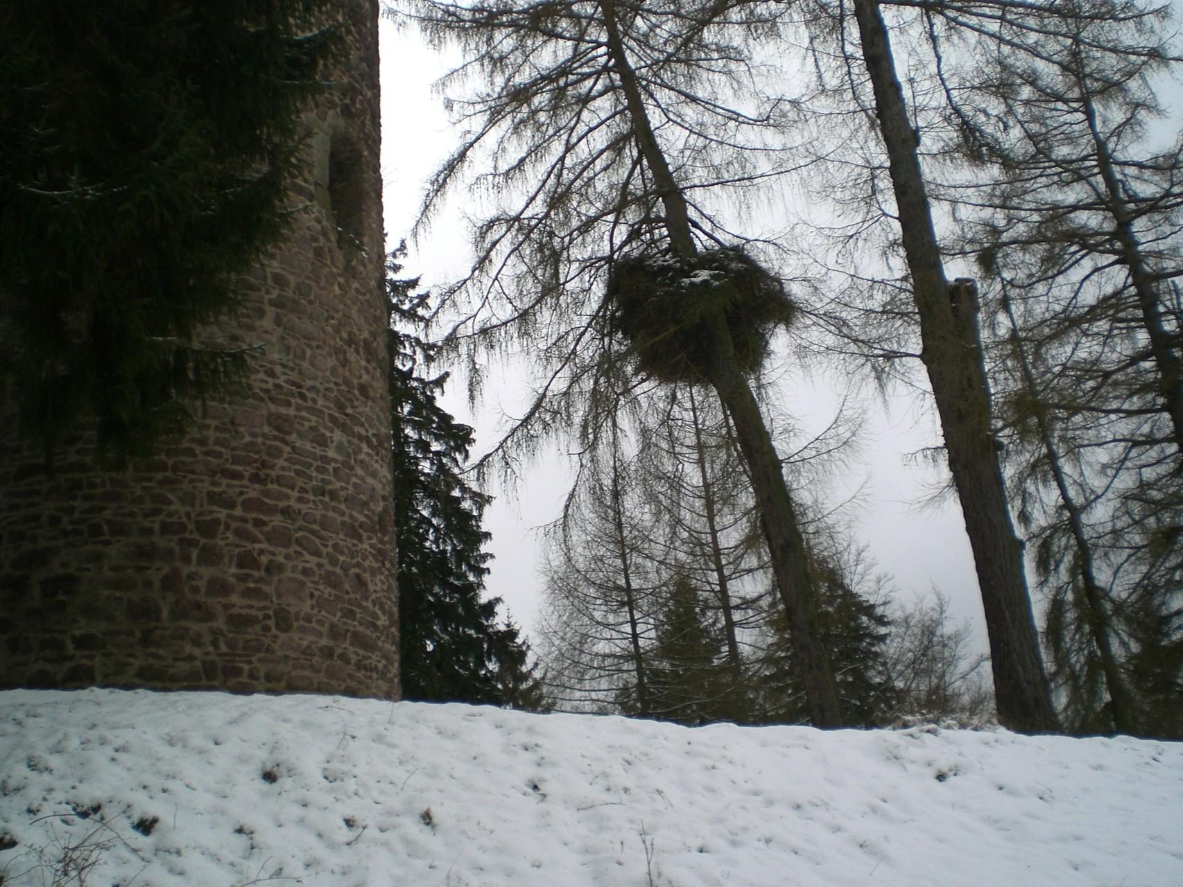 Hexenbesen (eigentlich schon Hexennest) Lärche, Leyline Thüringen