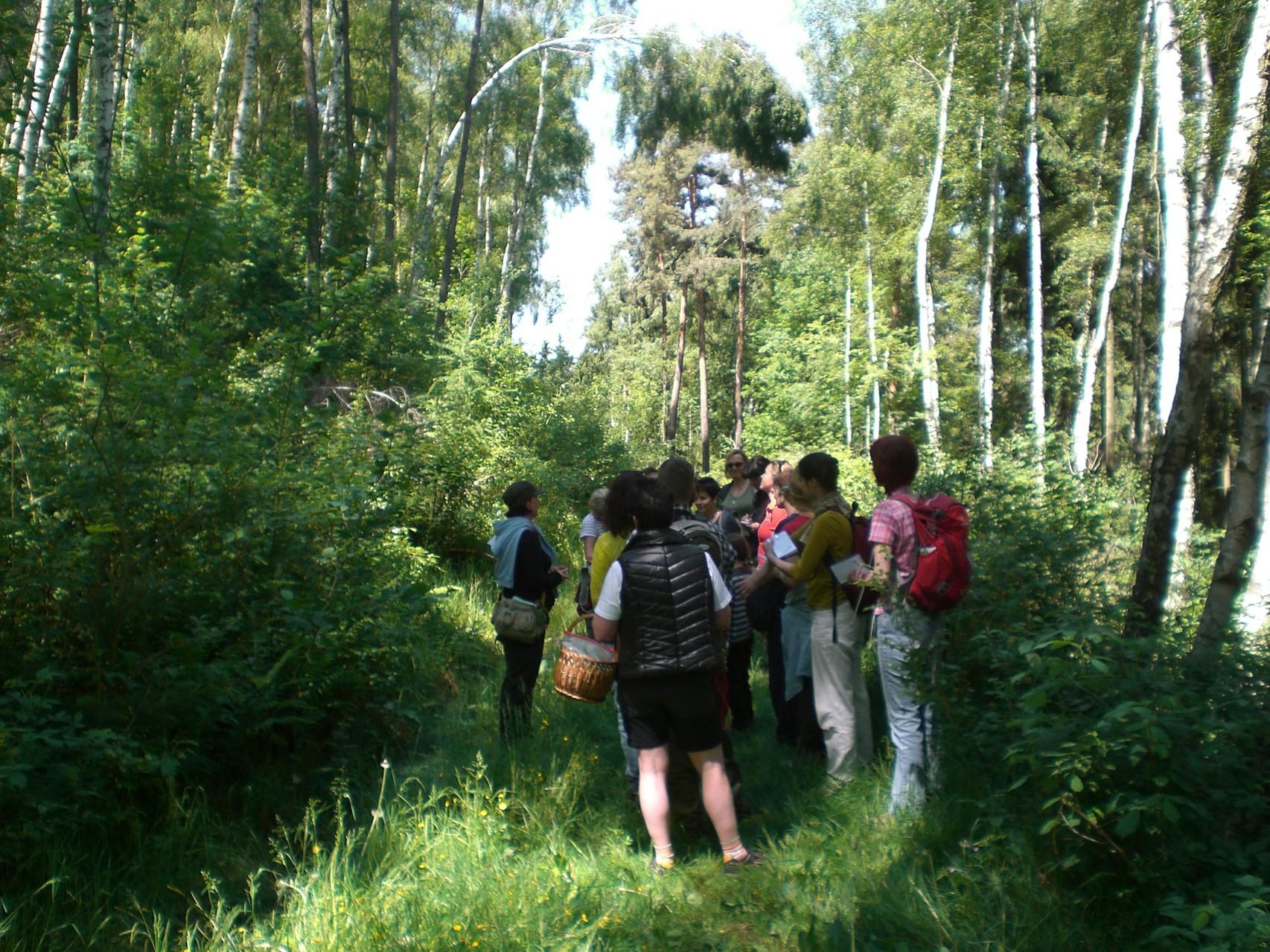 Kräuter in Feuchtgebieten