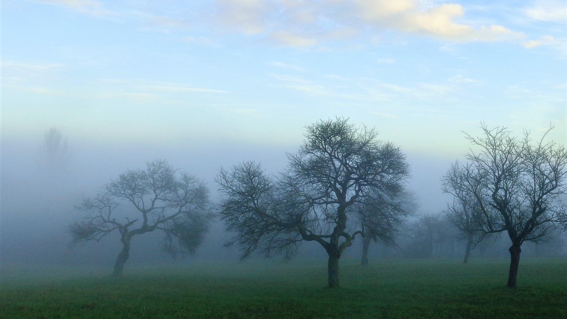 Nebel am Sauberg bei Felsberg