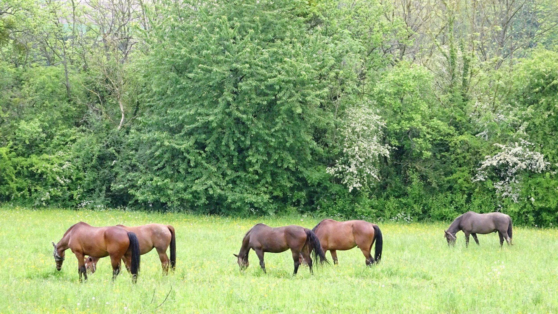 Pferde bei Felsberg