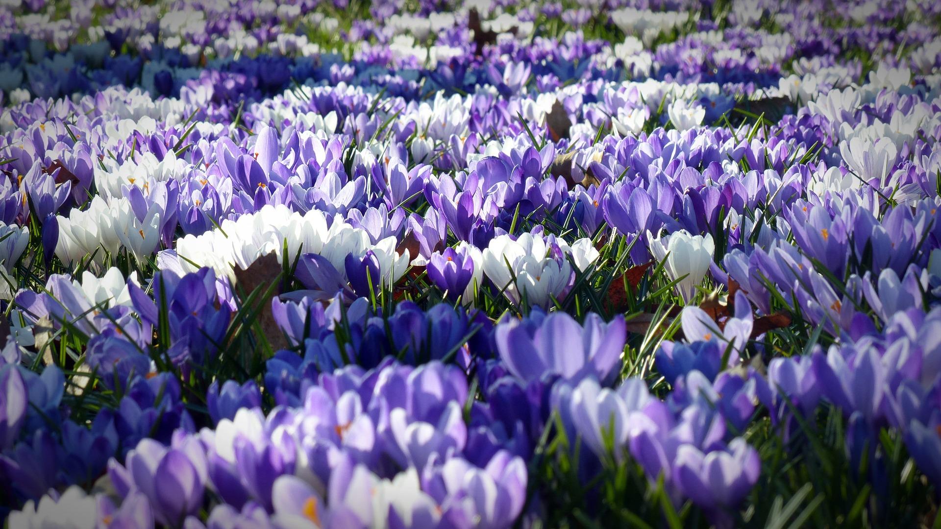 Bald ist es wieder Frühling