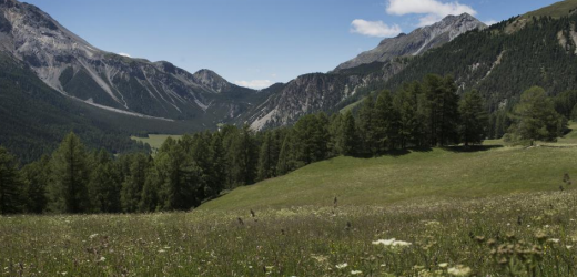 Blick über die Bergwiesen von Lü zum Ofenpass. (Bild: NZZ / Christoph Ruckstuhl)