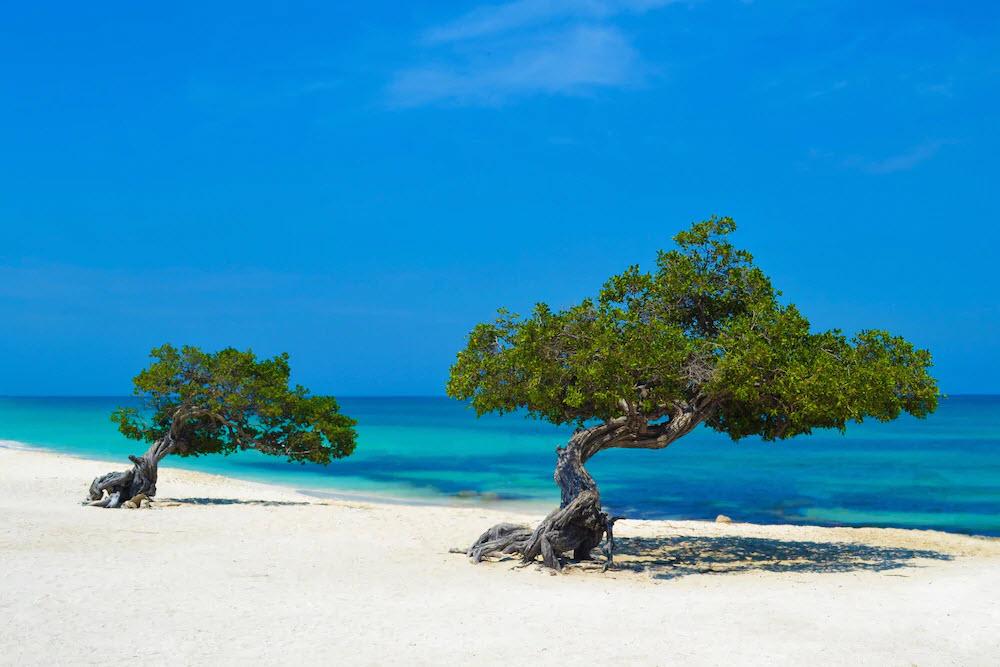 Auf Aruba liegt der drittschönste Strand: Der Eagle Beach!
