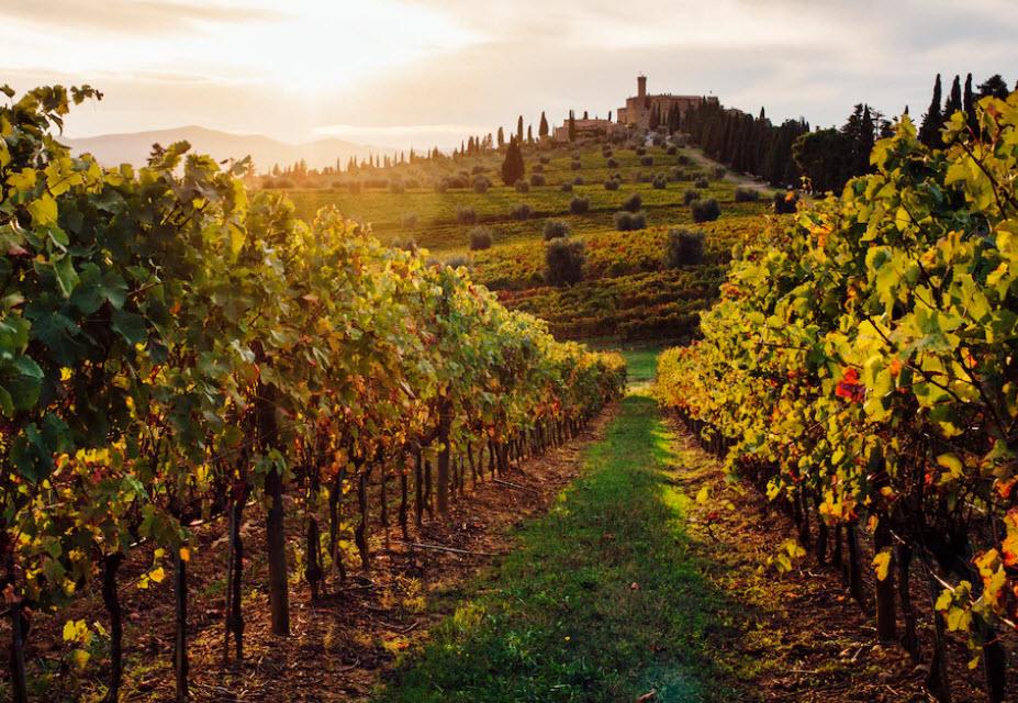 Ende August beginnt in der Toskana die Weinlese, die bis in den Oktober andauert. Die perfekte Ausrede, um ein paar Weingüter zu besuchen oder eine Weinprobe zu machen.
