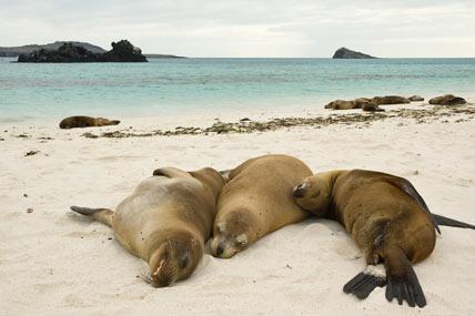 Platz 15: Galapagos-Inseln