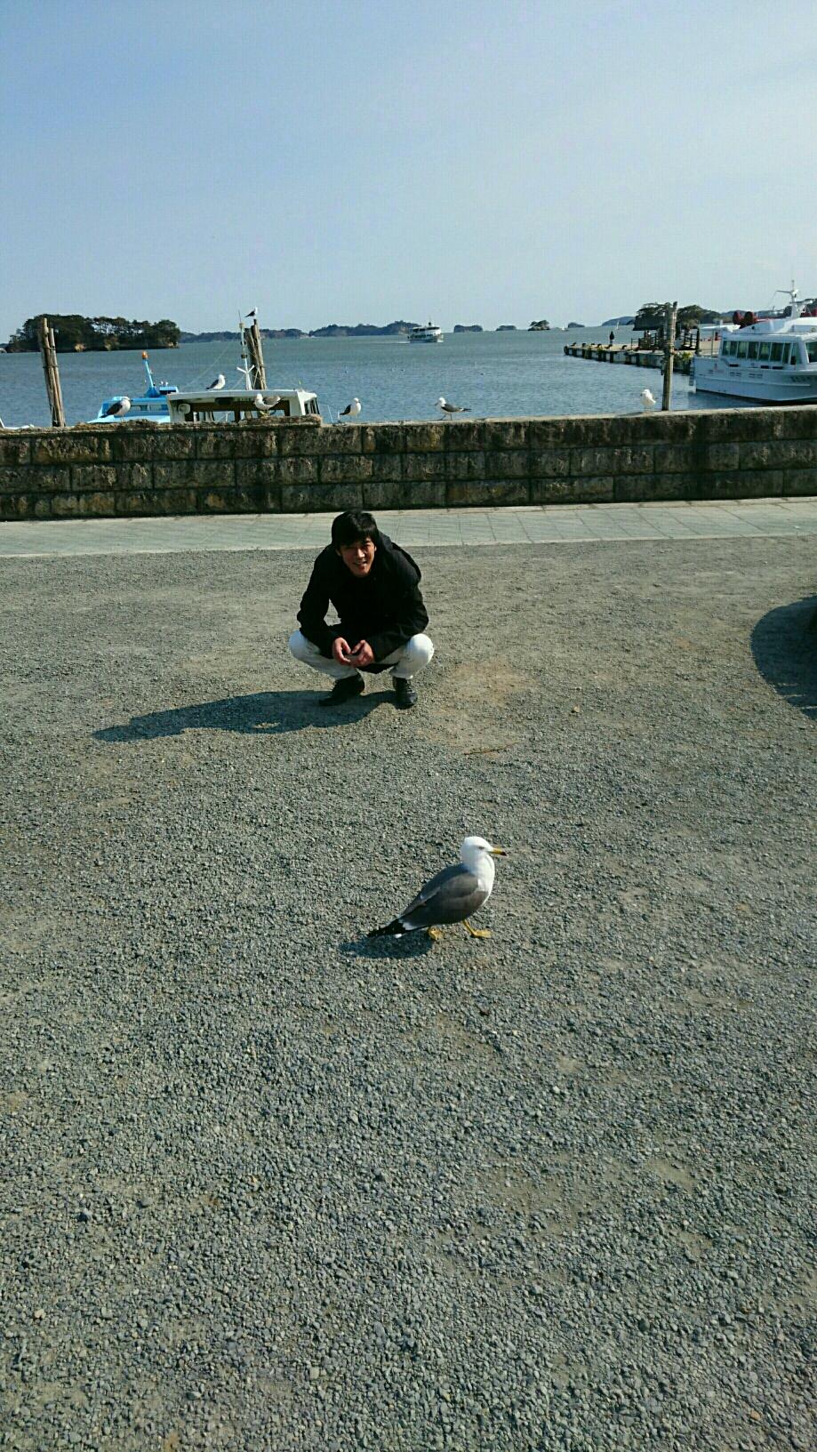 松島のカモメさん