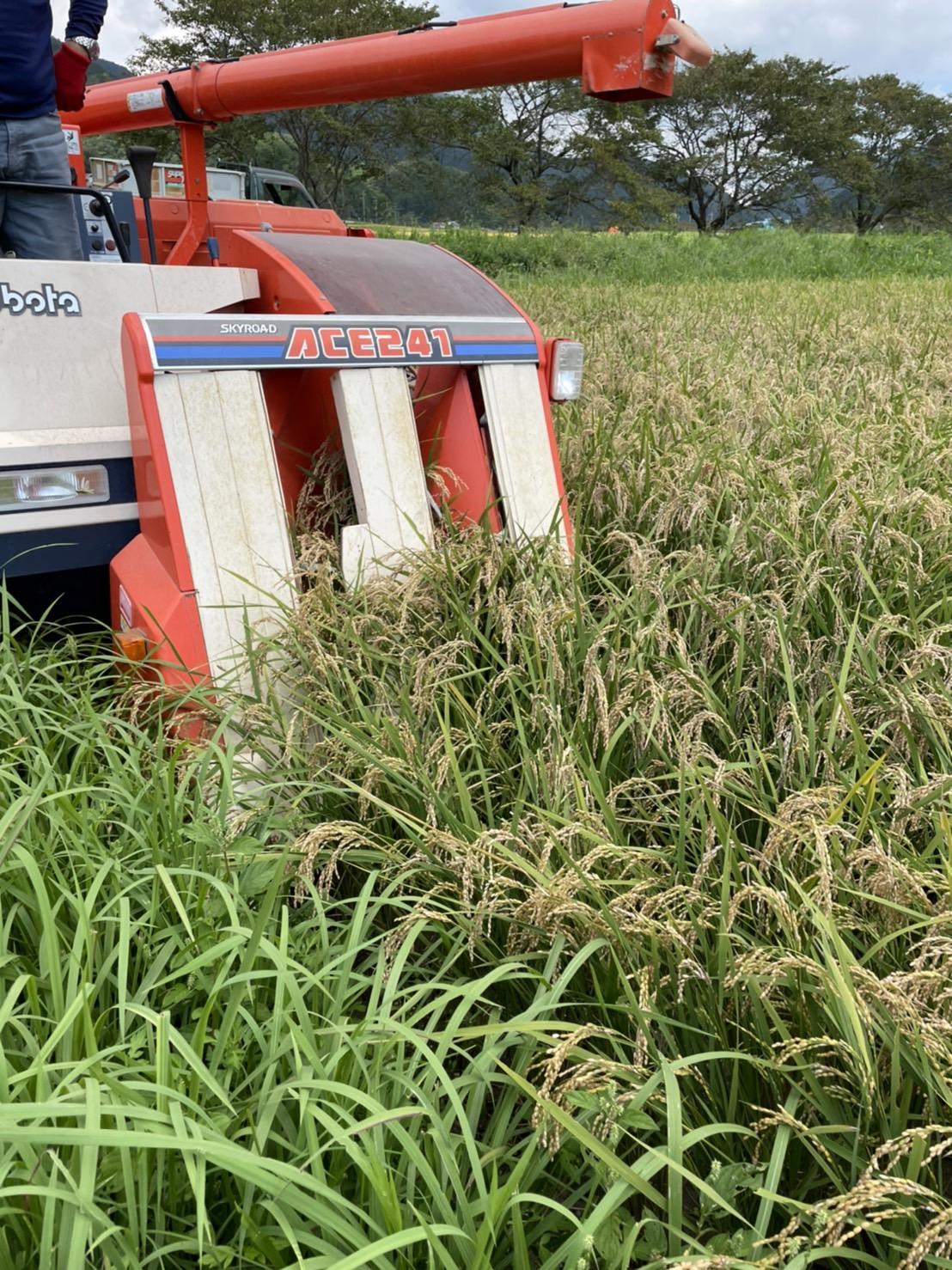 2021稲刈り始まる!