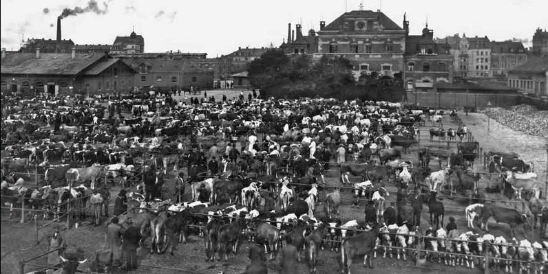 60er Jahre: Als der Schlachthof noch in Betrieb war