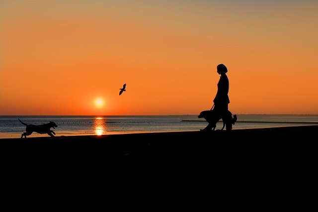Urlaub mit Hund und Kind auf Föhr
