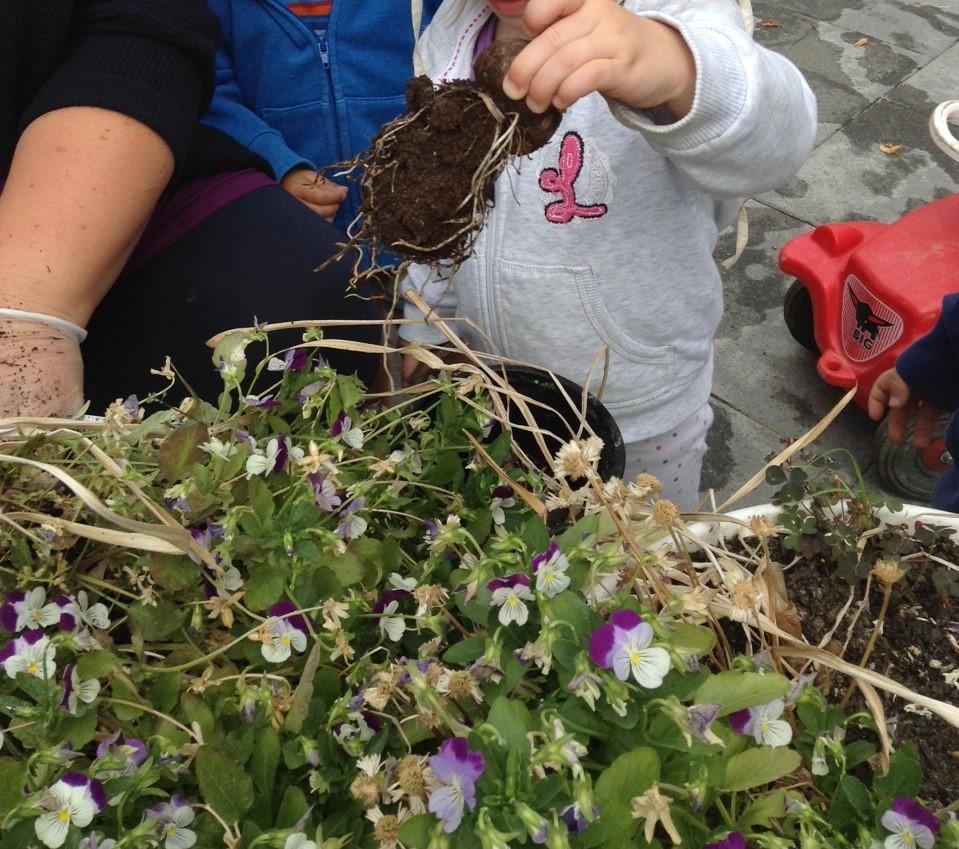 Frühling - Blumen einpflanzen