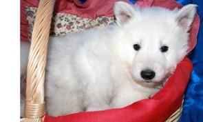 Pia-Mae   3 Wochen alt