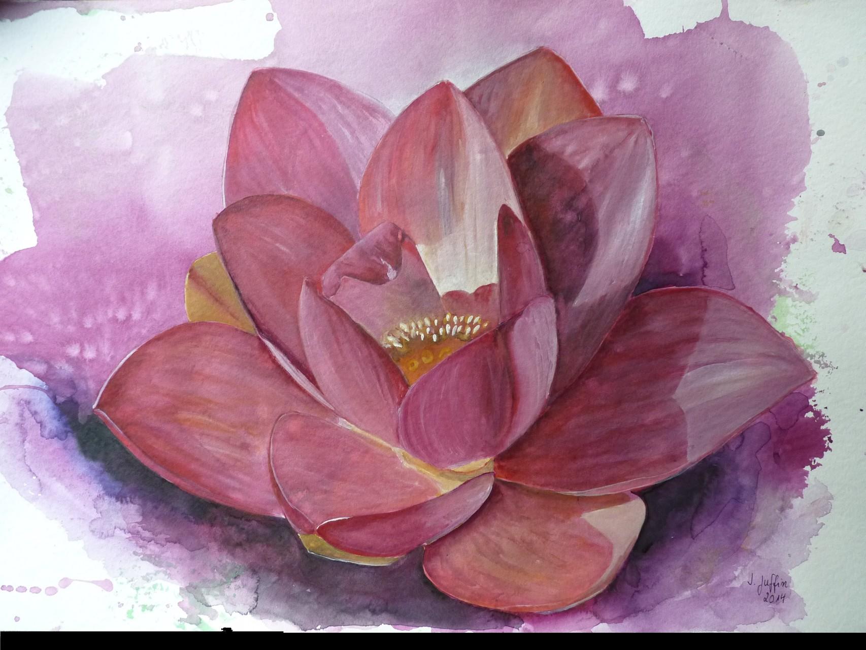 Lotusblüte, 2014