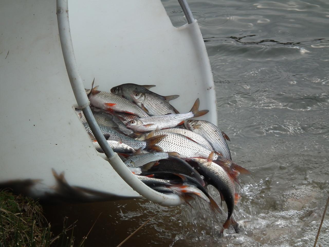 Fischbesatz 2013