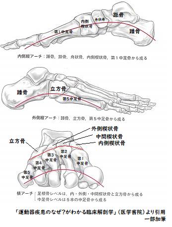 楔状 骨 内側