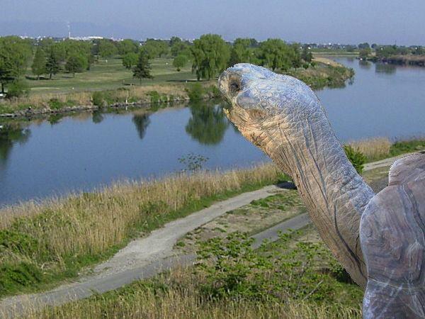 荒川に大亀がやってきた