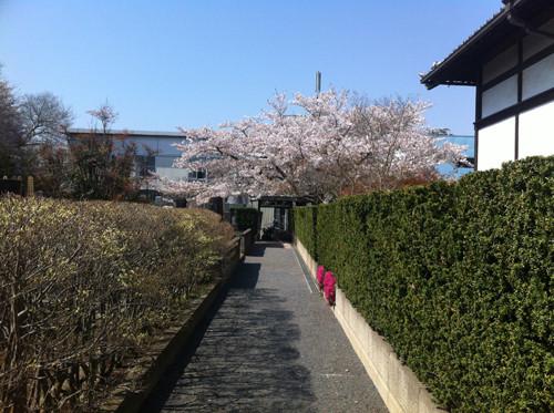 境内の中にある墓地横の小道。この先小さな出口を右に曲がってちょっとあるくと、慰霊塔群が見えてきます。この日は、とにかく桜がきれいでした。