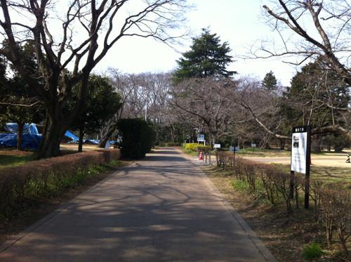 歴博側(椎木門の外)から本丸方面を撮影
