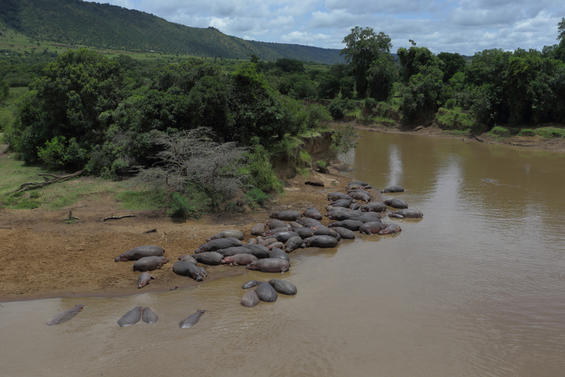 Hippo beach face aux tentes