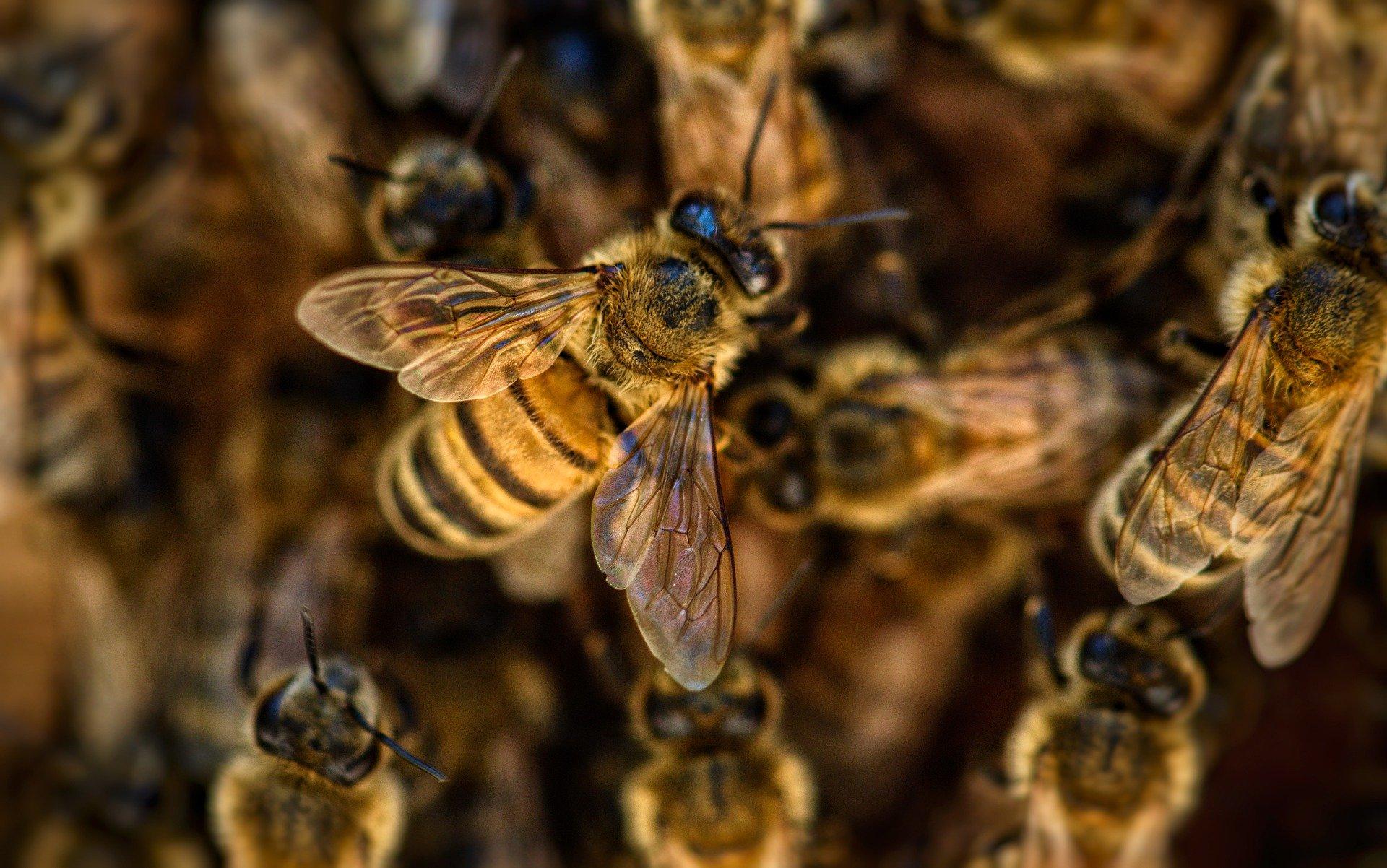 Insektenstiche – was Sie wissen sollten!