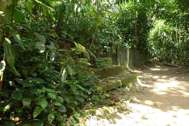 Singapur Treetop Walk