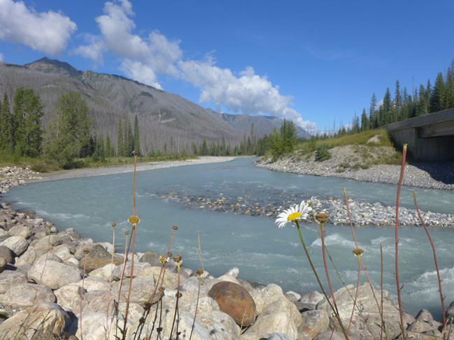 Kanada Alberta Fluss Blumen Rocky Mountains Waldbrand Bäume