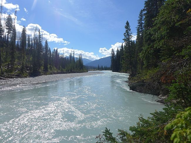 Kanada Alberta Gletscherfluss Fluss Rocky Mountains Wald