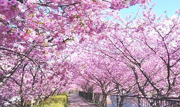 2018年3月 桜の開花