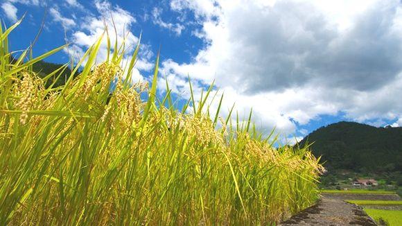9月の空と稲の収穫