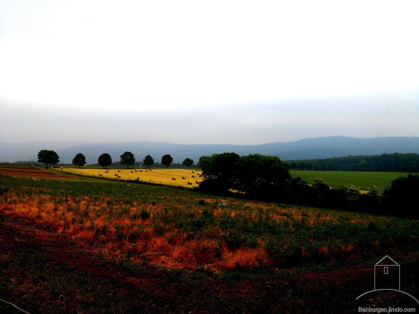 Wiesen und Felder bei Eitelborn