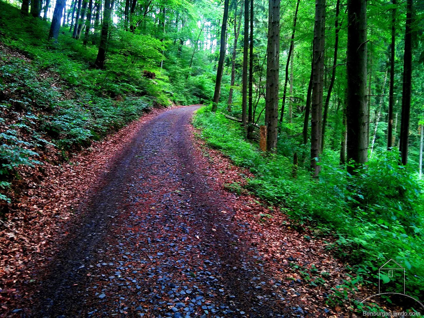 Waldweg zur Sporkenburg