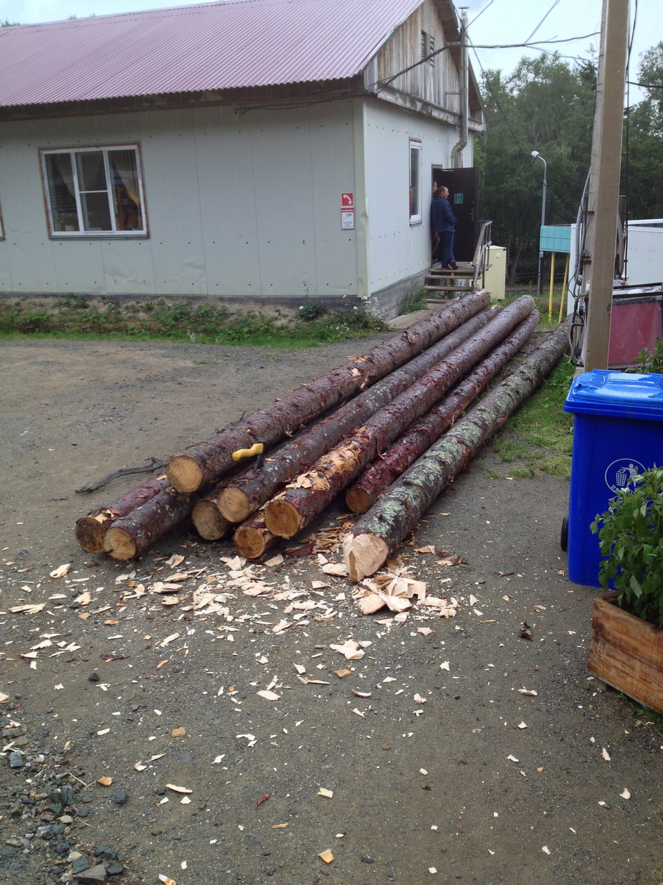 деревянные сваи длиной 11-12м, диаметр до 350мм