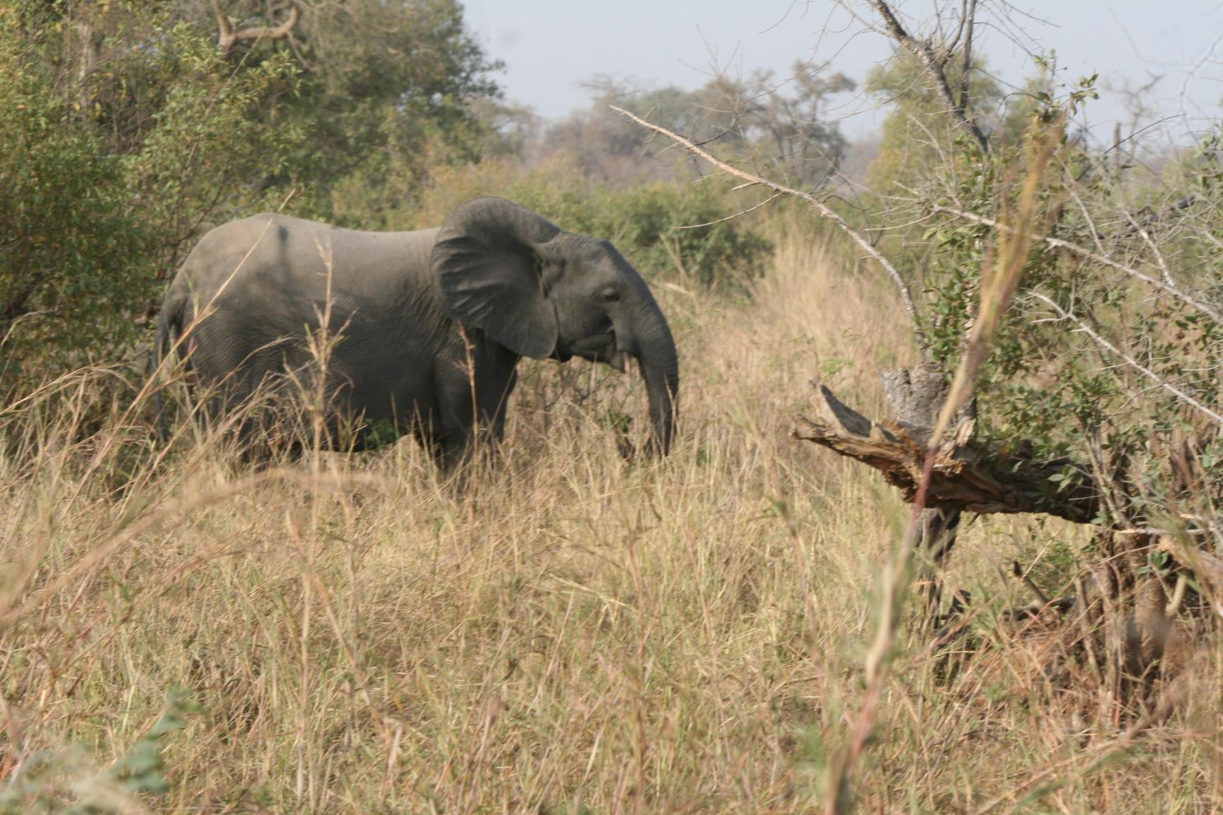 9. Elefant