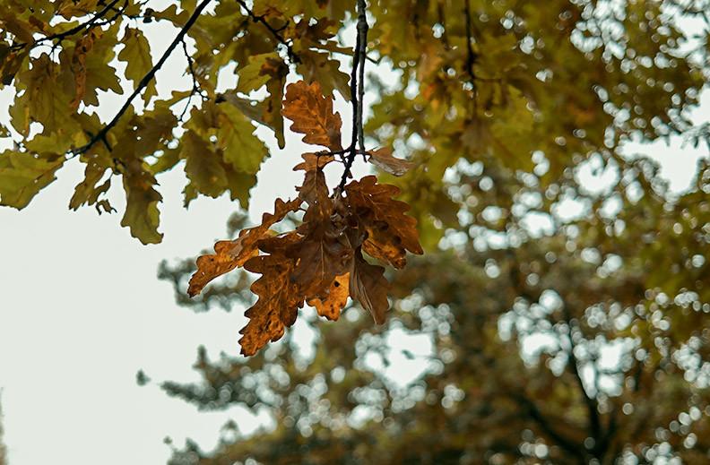 Herbst Outfit | Casual Wednesday - Eiskalt erwischt