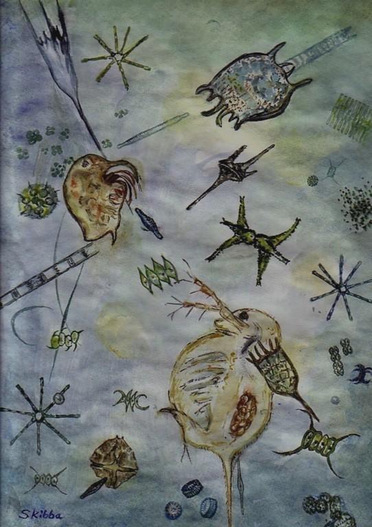 1995 Süßwasserplankton