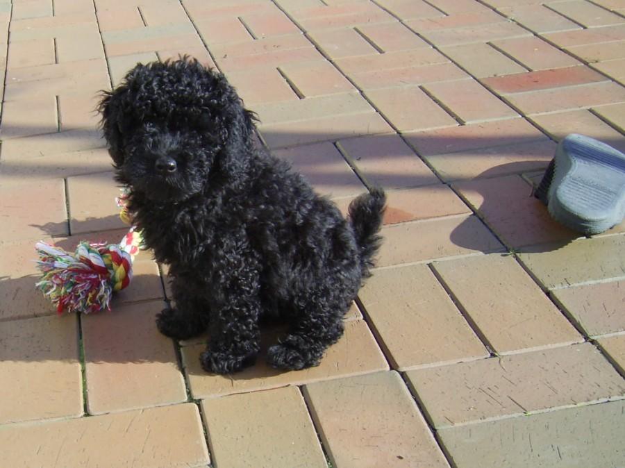 2007  Nele -  eine  neue Mitbewohnerin  10-12 Wochen alt