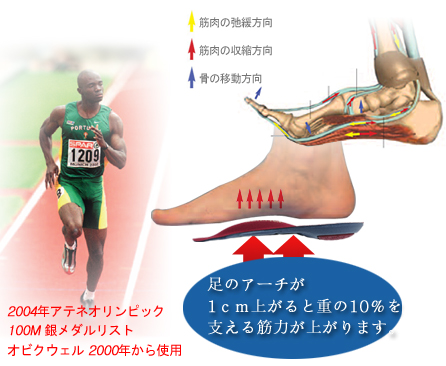 足のアーチと筋力関係