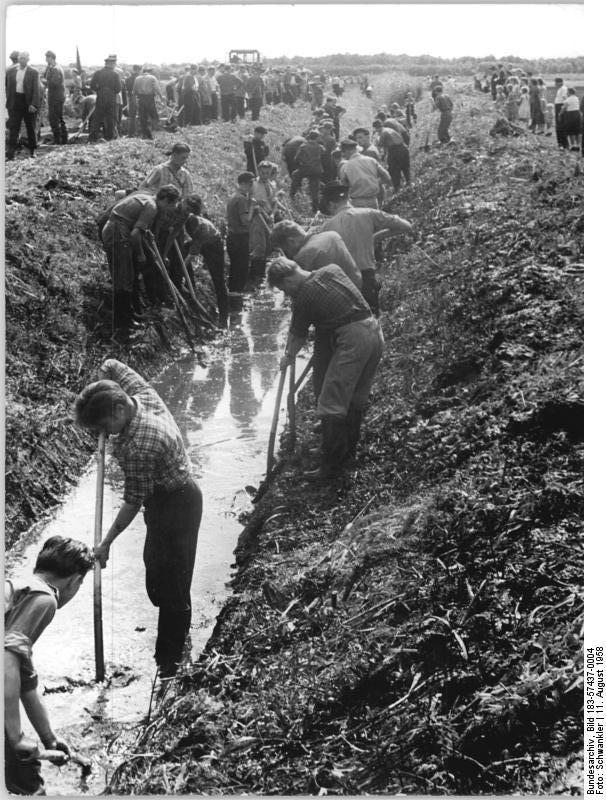 6264 Jugendliche entwässerten im Rahmen eines FDJ-Projektes die Friedländer Große Wiese. Foto: Bundesarchiv