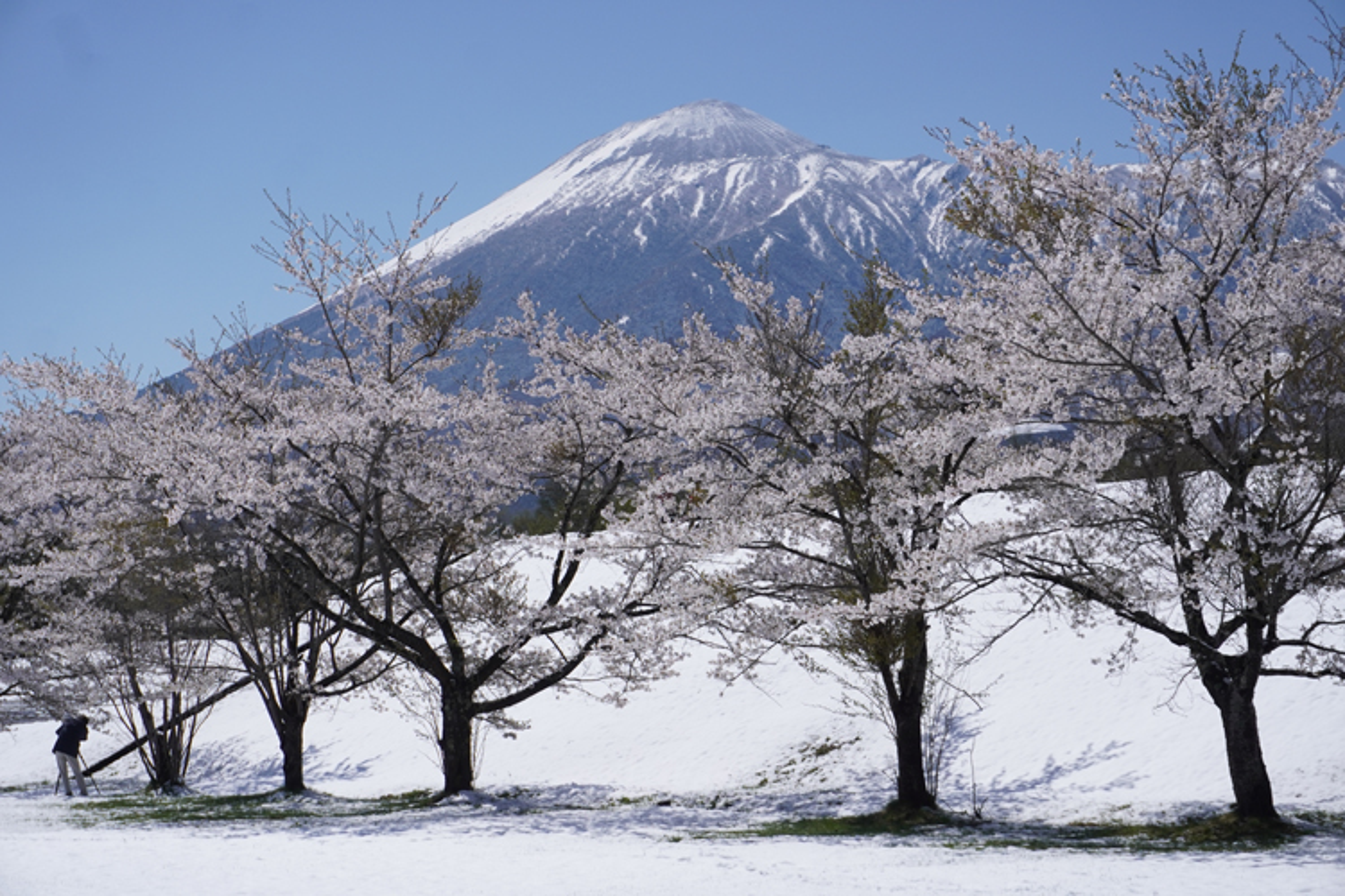 下倉スキー場のコンディションは日々良くなっております