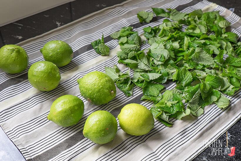 Zitronenmelissensirup selber machen