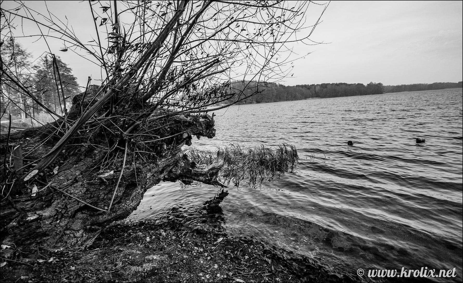 4. ...в то время, как другие, замаскировавшись под дерево, терпеливо ждут своих жертв.