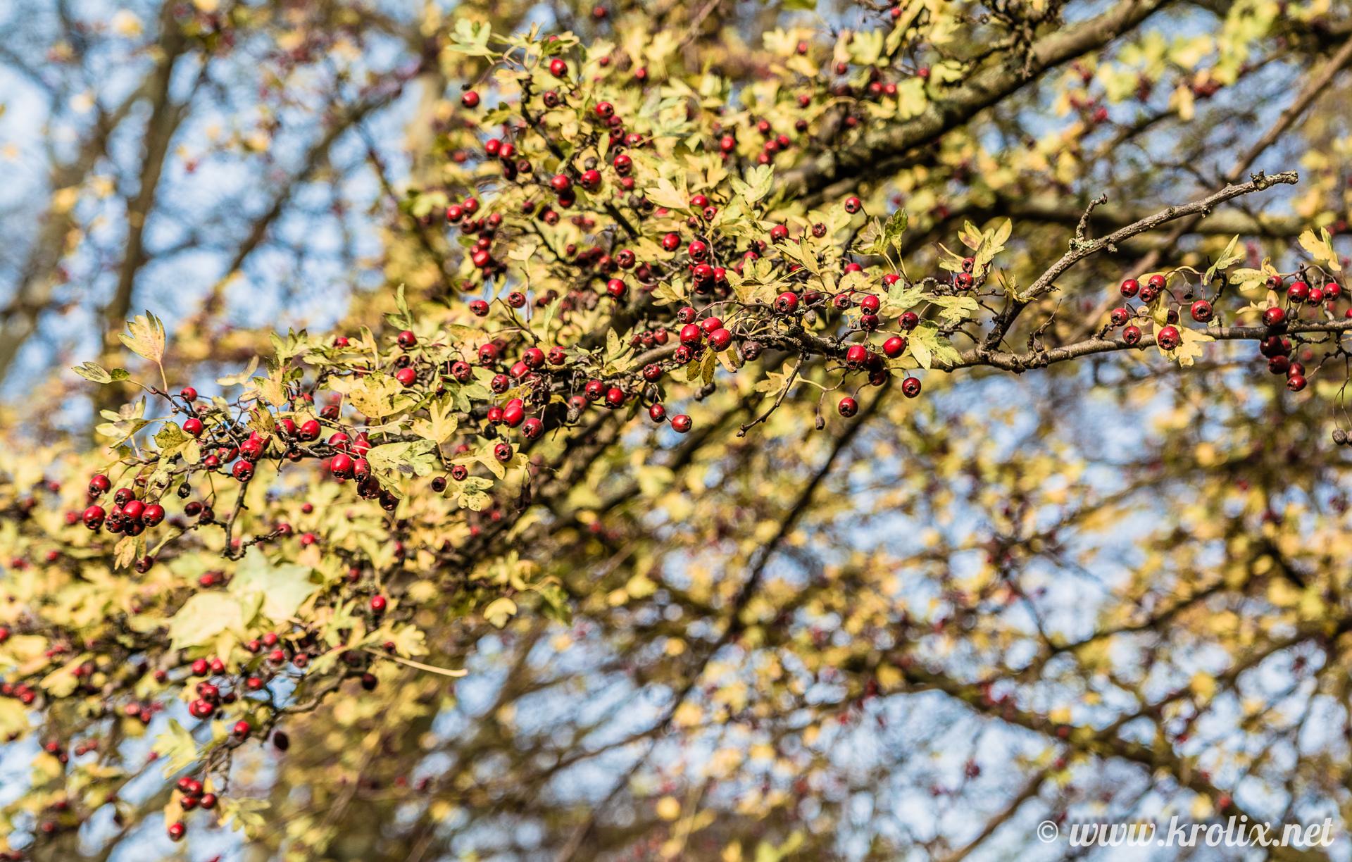1. В парках растут неведомые ягоды...