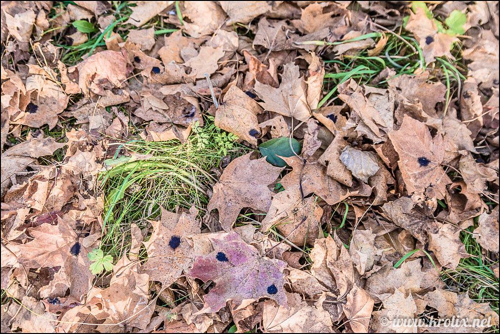 5. Осенняя листва здесь, несмотря на экологичность, болезная...