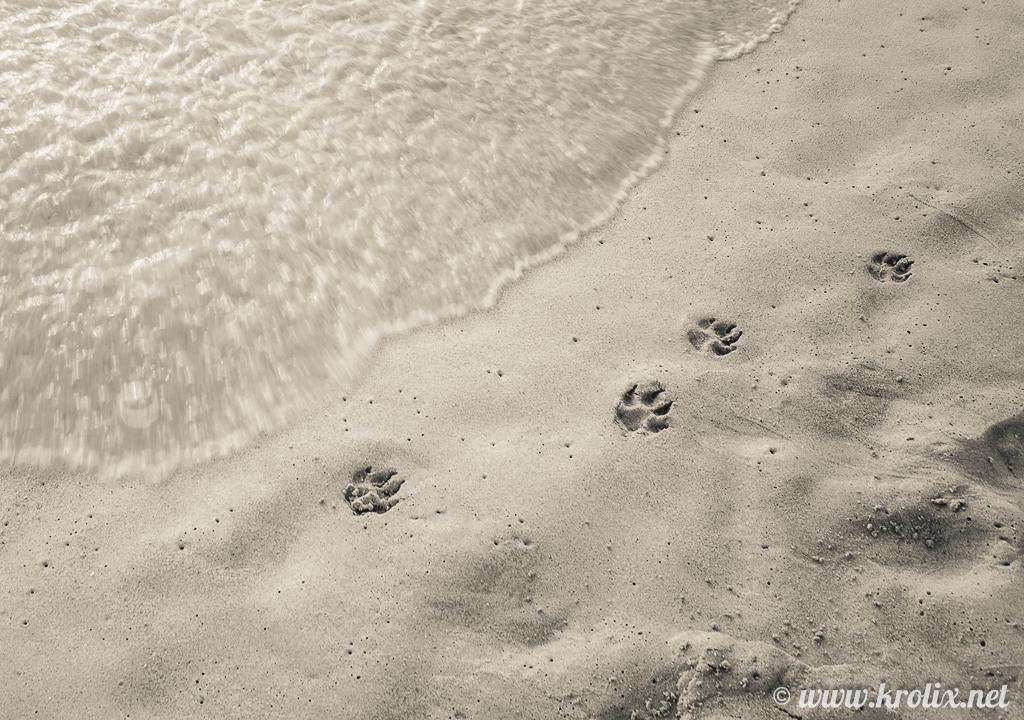 ...виднеются чьи-то свежие следы...