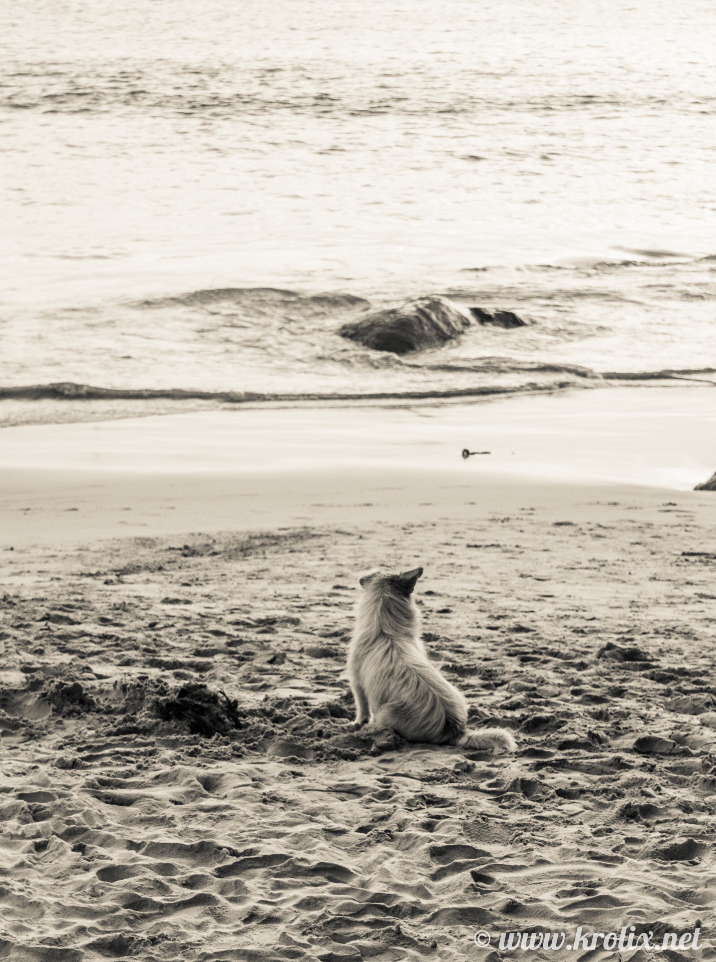 ...И собакевичи тоже. Задумчивый взгляд вдаль и нарастающая в груди решимость...