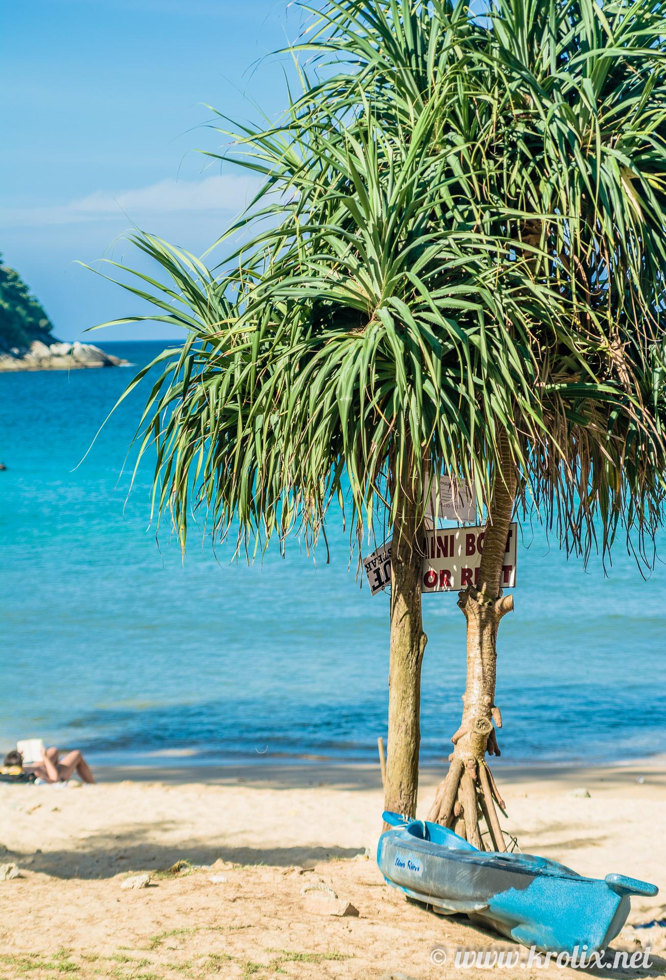 ...где рядом с декоративными пальмами были обнаружены каяки напрокат...